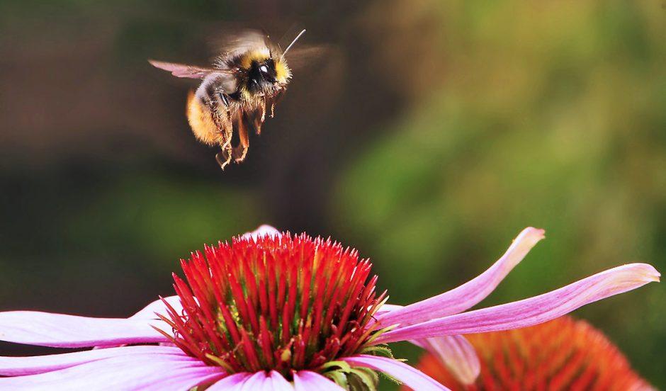 Amenez les abeilles